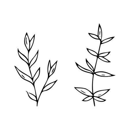 Hand-drawn plants.Doodle style, sketch, simple botanical line, drawing with floral elements, minimalism.Isolated.Vector illustration. Ilustração Vetorial