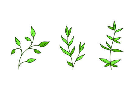 Hand-drawn plants.Doodle style, sketch, simple botanical line, drawing with floral elements, minimalism.Isolated.Vector illustration.