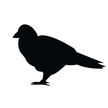 Silhouette pigeon.Isolated image on a white background. Black outline of birds for your design.Vector illustration
