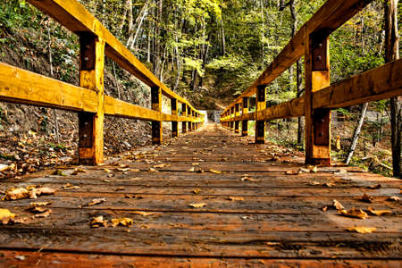 Wooden bridge HDR ending in a beautiful green forest. photo