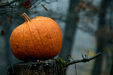 background colors: big ripe color pumpkin in autumn forest