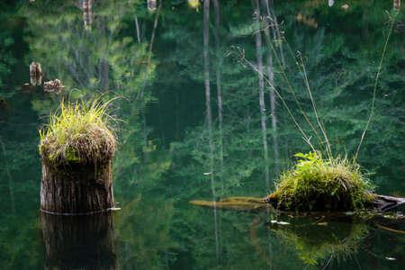 sunken: old mossy sunken broken log in lake water