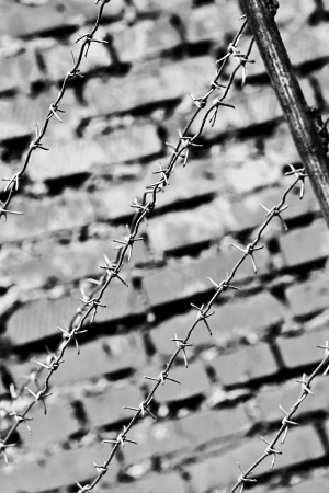 Barbed wire on the background of a brick wall in black and white colors photo