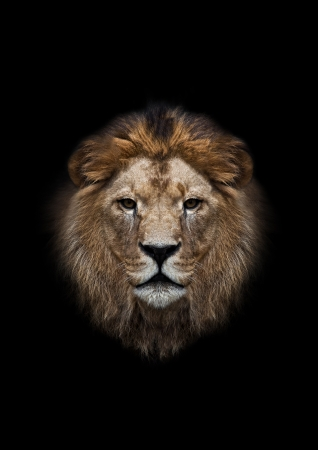 The head of a lion on a black background Reklamní fotografie - 23438580