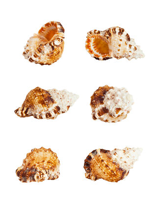 Sea shell on a white background in different angles photo