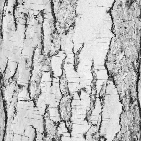 birchen: Birch bark in the background