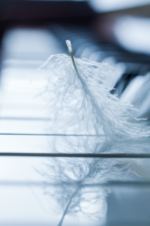 weightless: Feather closeup on piano keyboard in cold colors Stock Photo