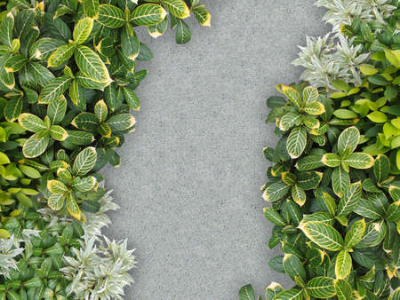 top view of stone path in garden photo