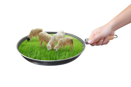graze: hand holding sheep farm in pan isolated on white Stock Photo