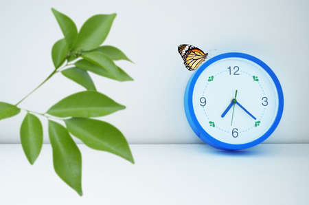 blue clock with butterfly and green leaf foreground