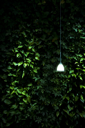 Green plants with a lamp at night