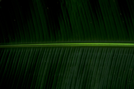 Close-up of a leaf at night
