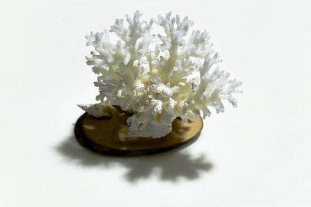 The white Coral from Maldives, From the Ocean Stock Photo