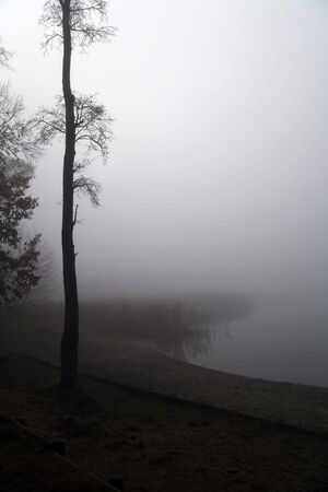 lonely tree on misty bank of lake photo