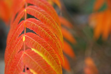 red autumn leaves in the forest Stock Photo - 746590