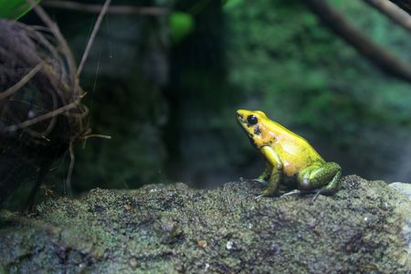 irridescent: portret of yellow frog