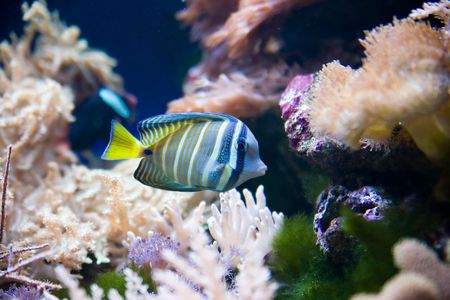 swimm: tropical fish - picture taken in Poznan zoo Stock Photo