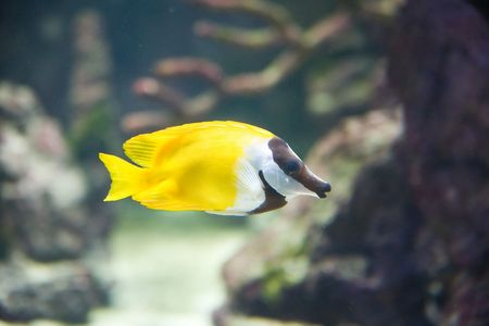 poznan: tropical fish - picture taken in Poznan zoo Stock Photo