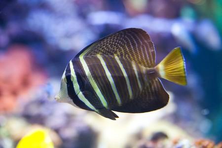 tropical fish - photo taken from oceanarium Stock Photo - 4380964