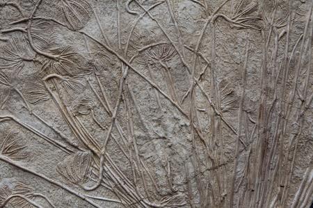 triassic: fossilised sea-lillies  Crinoidea
