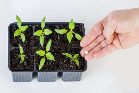 The hands of a farmer giving fertilizer to young green plants. on white background. Stock Photo