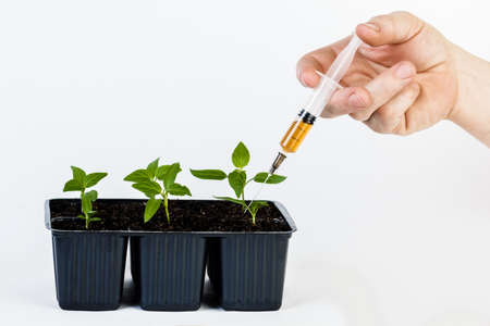 riesgo quimico: The hands of a farmer giving fertilizer to young green plants. on white isolated background.