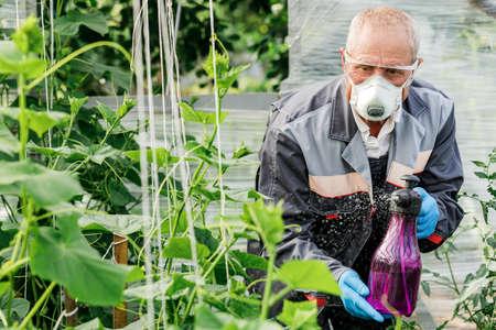 Worker sprays organic pesticides on plants.