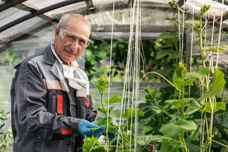 male scientist examines and writes to the clipboard while studying plants in a greenhouse Stock fotó