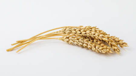 Spikelets and wheat grains on a white background