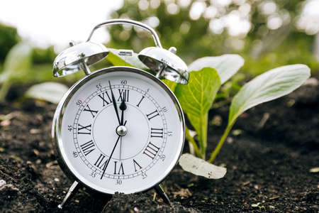 Clock and seedling, the concept of planting plants in spring. Work in the spring garden. Zdjęcie Seryjne