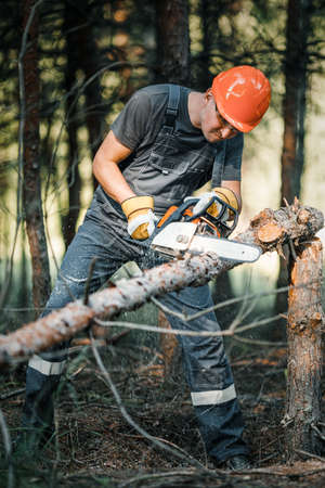 The logger uses a saw. A person using a saw while cutting wood.