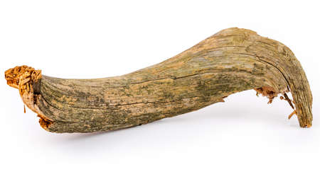 Dry dead snag on a white isolated background Standard-Bild