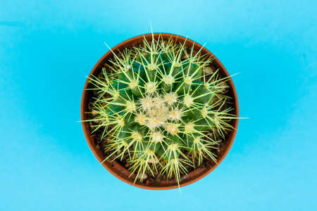 A small green cactus on a blue background. Minimalistic composition. Archivio Fotografico