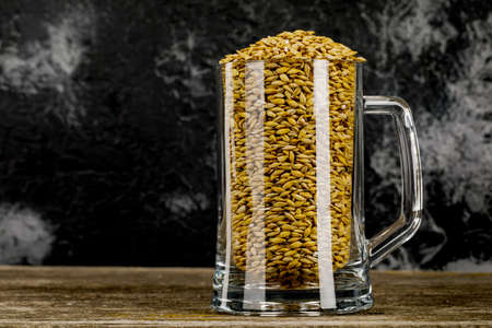 A beer mug filled with barley grains. The concept of the brewing process. Traditional craft ingredients for the brewery.