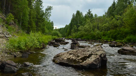 forest stream: Quick forest stream