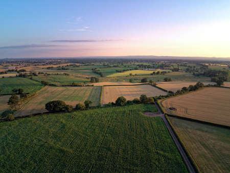 Aerial view on cheshire corn and wheat field. Summer sunset