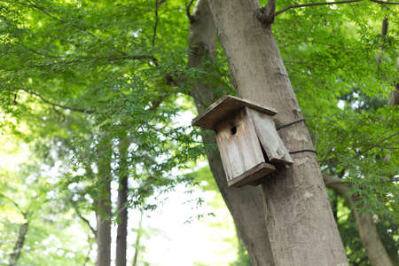 bird feeder: Bird feeder