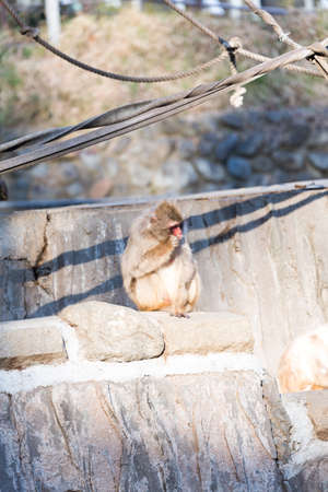 fall winter: monkey