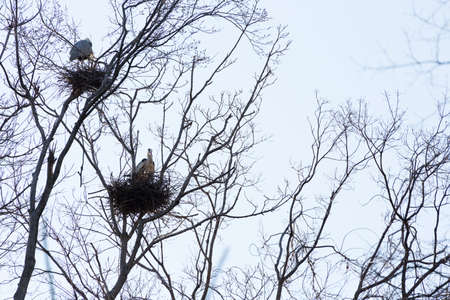 heron: heron Stock Photo