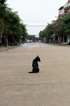 A black dog sitting in the middle of the Street