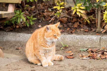 Stray cats are very cute