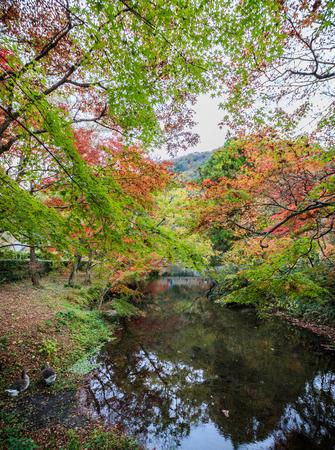 Beautiful Panorama Autumn in Yufuin Town on November 11, 2015 in Oita, Japan. Stock Photo