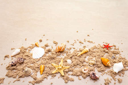 Seashells sandy summer background. Lots of different seashells piled together, copy space, frame