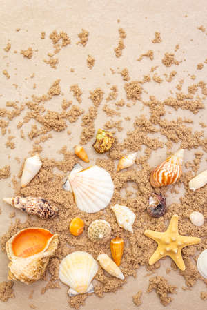 Seashells sandy summer background. Lots of different seashells piled together, copy space, top view, close up