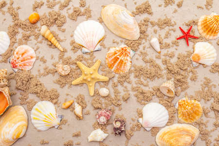 Seashells sandy summer background. Lots of different seashells piled together, copy space, top view