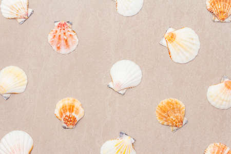 Seashells summer background. Lots of different seashells piled together, top view, close up