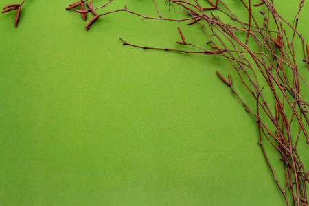 Birch branches on bright green background. Easter background. Zero Waste concept, top view, copy space