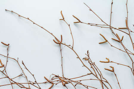 Birch branches on light blue background. Easter background. Zero Waste concept, top view, copy space Stock Photo