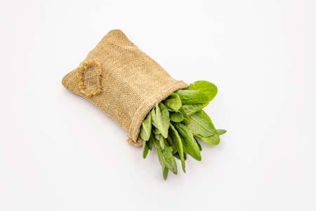 Fresh green sorrel isolated on white background. A bag of vintage fabric, patch on it. Traditional ingredient for spring soup