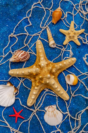 Seashells summer background. Lots of different seashells piled together, sea stars, fishing net. Navy blue nautical background, top view